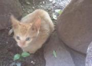 regalo hermoso gato macho