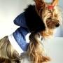 Canine Couture, ropa para perros con onda!