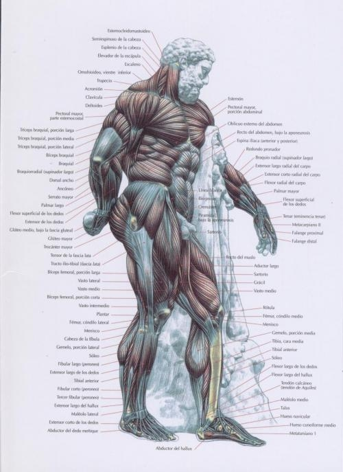 Curso de musculacion y personal training