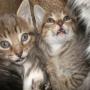 Regalo últimos gatitos