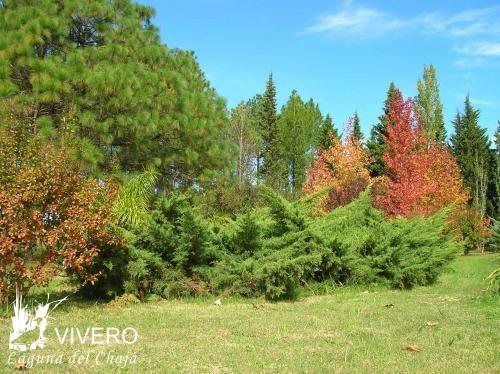 Arboles arbustos imagui for Viveros en maldonado