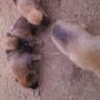 cachorros para el dia del niño