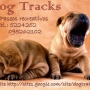 Dog Parks     Paseos recreativos para perros