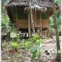 CABAÑAS HABITACIONES, ALOJAMIENTO AMAZONAS IQUITOS PERU CHAMANISMO AYAHUASCA Retiros Chamanicos