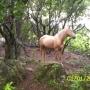 vendo campo,  hermosas 52 hectareas  en maldonado