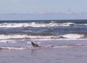BRASIL - Terrenos en Playas Vírgenes - ATENCION INVERSORES