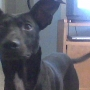 busco novia para mi bello perro