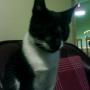 REGALO hermoso gato de casi 1 año, desparacitado, vacunado, super cazador