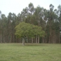 Vendo Campo forestal-ganadero en Treinta y Tres