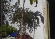 Vendo 3 plantas juntas o separadas
