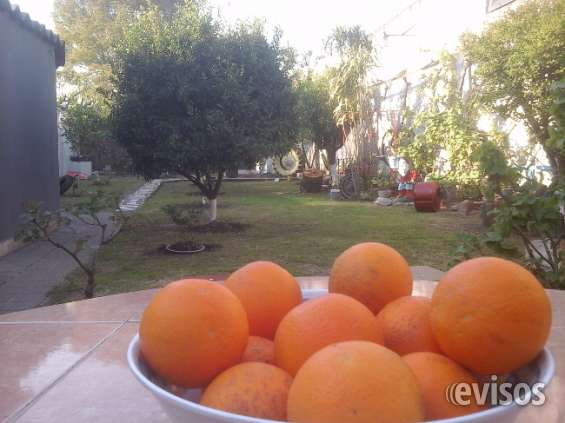 Parque de arboles frutales