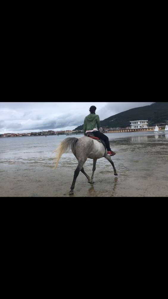 Trabajo etológico con caballos, entrenamiento doma