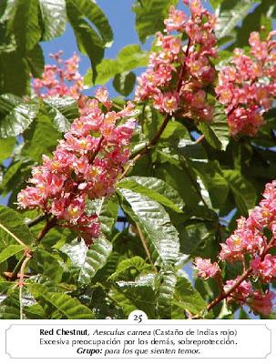 Curso de terapeuta floral be bach y curso de iridologia